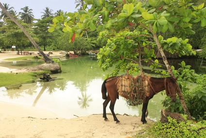 Small horse at Rincon Beach, Samana Peninsula, Dominican Republic