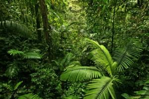 Französisch-Guayana-Von der Strafkolonie zum Raumfahrtzentrum 3
