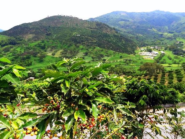 20 Tage Kolumbien Rundreise 6