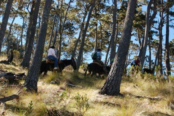 Pico Duarte Trekking 4