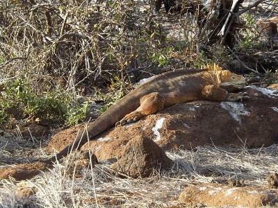Galapagos Reisezeit um Reptilien zu beobachten