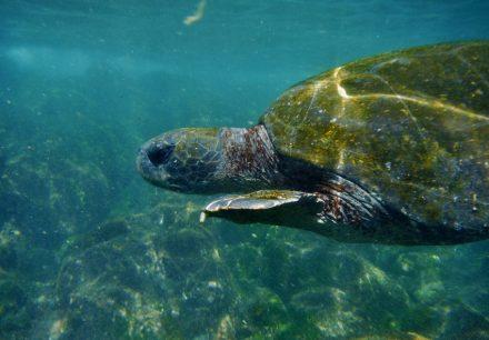 Galapagos Reisezeit 1