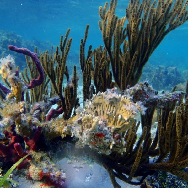 5 Tage San Blas Inseln Segeln 8