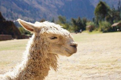 Tour Zum Titicacasee-Puno 5