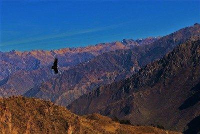 Colca Canyon 2