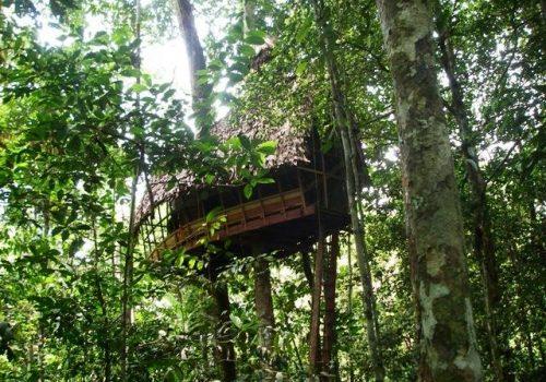 Amazonas-Die grüne Wüste 8