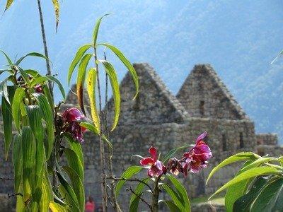 10 Tage Peru Rundreise-Machu Picchu und Manu Nationalpark 5