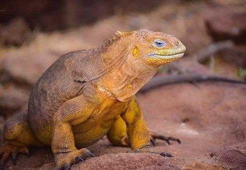 5 Tage Galapagos Nationalpark 3