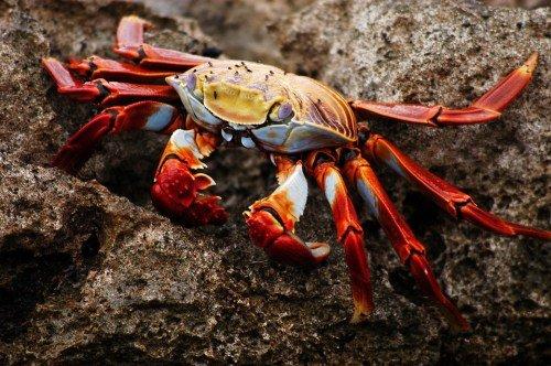 5 Tage Galapagos Nationalpark 4
