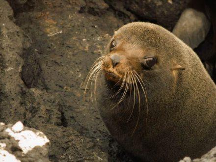 5 Tage Galapagos Nationalpark 11