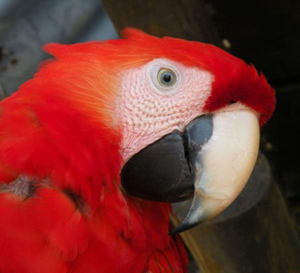 Höhepunkte Costa Ricas 1