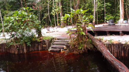 Vielfältiges Suriname 22