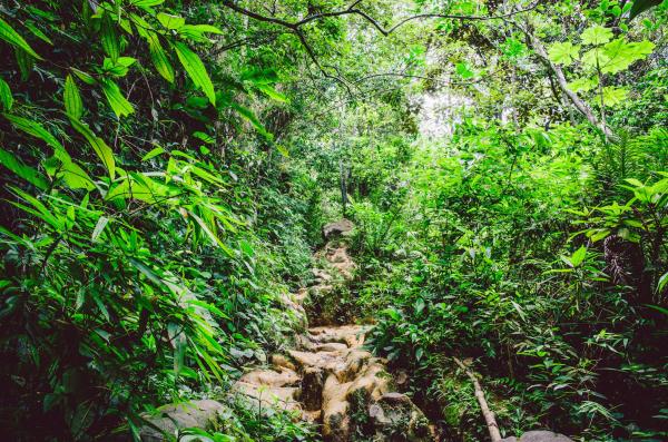 Wildes Brasilien - Amazonas, Pantanal und mehr... 7