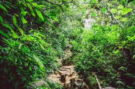 Naturparadies Brasilien 7