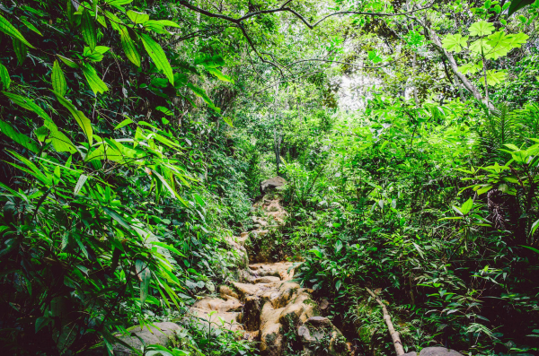 Naturparadies Brasilien 2