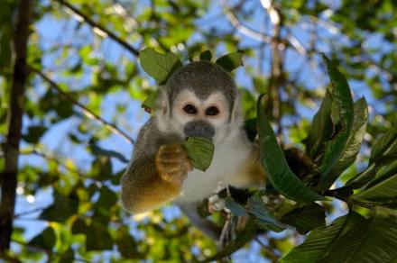 Amazonas Entdeckerreise 3