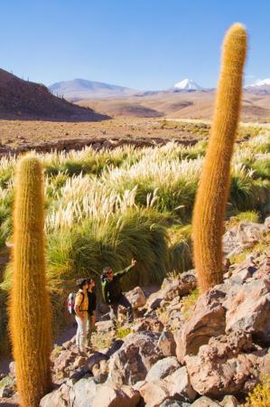 Der Norden Chiles 3