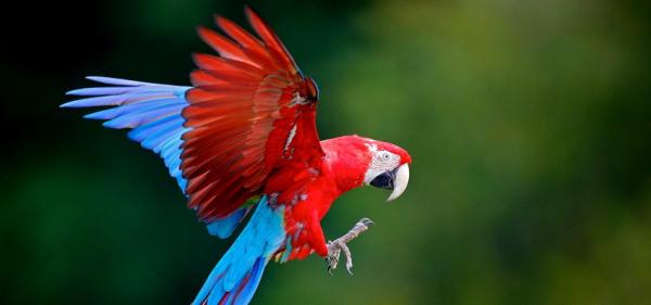 Naturwunder Costa Rica 1